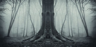 Symmetrical spooky tree in forest with fog Stock Images