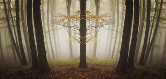 Symmetrical strange tree in a forest with fog Stock Images