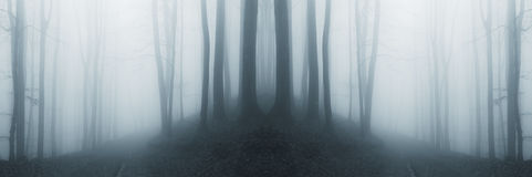 Symmetrical surreal forest with fog royalty free stock images