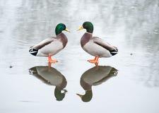 Symmetrie Royalty-vrije Stock Fotografie