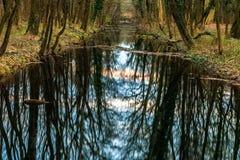 Symmetrische bezinning van bomen in waterspiegel Stock Afbeeldingen