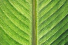 Symmetrische Blattbeschaffenheit Lizenzfreies Stockbild