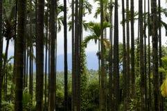Symmetrische bomen die één of andere ontzagwekkende symmetrie maken Stock Fotografie