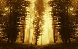 Symmetrische bosachtergrond met mist bij zonsondergang stock fotografie