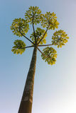 Symmetrischer Baum Lizenzfreie Stockfotos