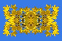 Symmetrisches Bild gemacht vom Foto von gelben Ahornblättern Stockfotografie