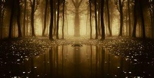 Symmetrisches Foto von einem See in einem dunklen Wald mit Nebel Stockbilder