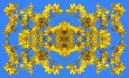 Symmetrisk bild som göras av fotoet av gula lönnlöv Royaltyfri Foto