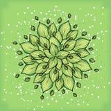 Symmetrisk geometrisk rund modellsammansättning av växter Royaltyfria Foton