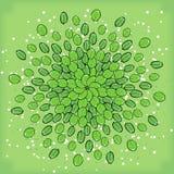 Symmetrisk geometrisk rund modellsammansättning av växter Arkivbild