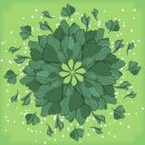 Symmetrisk geometrisk rund modellsammansättning av växter Fotografering för Bildbyråer