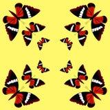 symmetrisk modell Fjärilar på gul bakgrund Royaltyfria Bilder