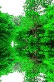 Symmetrisk växtskönhet Arkivfoto