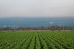 Symmetriska växter med Liechtenstein i bakgrunden Fotografering för Bildbyråer