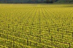 symmetriska vines Royaltyfria Foton