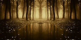 Symmetriskt foto av en sjö i en mörk skog med dimma Arkivbilder