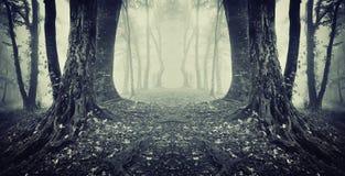 Symmetriskt mörkt foto av en spöklik skog med dimma arkivbilder