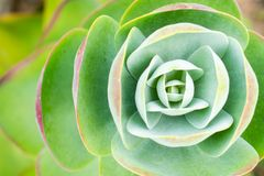 Symmetrical plant seen from above stock photos