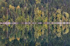 Symmetry and Fall colours.  Birkenhead Lake reflections in September. Symmetry and Fall colours.  Calm waters of Birkenhead Lake, BC, reflect the shoreline of Royalty Free Stock Photos