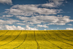 Symmetry on the rape field Royalty Free Stock Image