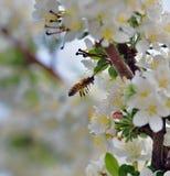 Symols de la primavera Imagen de archivo libre de regalías