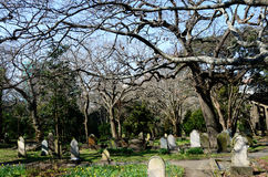 Symonds Street Cemetery in Auckland New Zealand Royalty Free Stock Photography