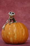 SYMPATHETIC SKELETON GRABBED A HALLOWEEN PUMPKIN. Sympathetic skeleton that continues to laugh grabbed a Halloween pumpkin vertical image with purple background Royalty Free Stock Photo
