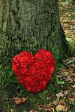 Sympathieblumen nahe einem Baum Stockfotos