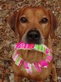 Sympathieke hond met halsband van papierafval royalty-vrije stock foto's