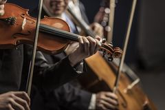 Symphonic string orchestra performing on stage. Professional symphonic string orchestra performing on stage and playing a classical music concert, violinist in stock photos
