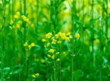 Grön naturlig bakgrund Royaltyfri Fotografi