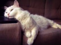 synad blå katt Royaltyfria Foton