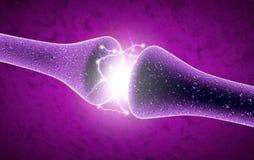 Synapse är en struktur som tillåter en neuron- eller nervcell att passera en elektrisk eller kemisk signal till en annan neuron e royaltyfri illustrationer
