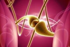 Synapse Royaltyfri Fotografi