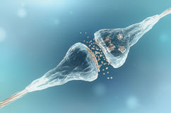 Free Synapse And Neuron Stock Photography - 66864212