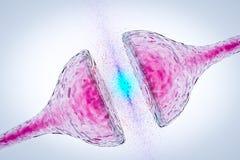 Synapse entre de lien neural de neurone de deux le réseau neurologique récepteurs de synapse de neurones illustration libre de droits