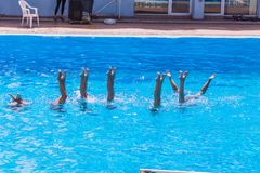 Synchronised swimming. Beautiful lean female legs in the water of a swimming pool. Concept of beauty, artistry. Athleticism and synchronicity royalty free stock images