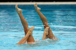 Synchronized Swimmers. Legs point up out of the water in action Stock Photography