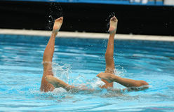 Synchronized Swimmers. Legs point up out of the water in action Royalty Free Stock Image