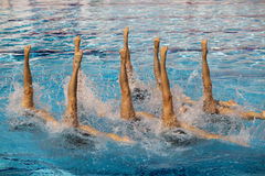 Synchronized swimmers. Synchronized swimming. Synchronized swimmers legs movement Stock Photos