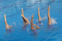 Synchronized swimmers. Synchronized swimming. Synchronized swimmers legs movement Stock Photography