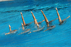 Synchronized Swimming. Synchronized Swimmers legs point up out of the water in action Stock Image