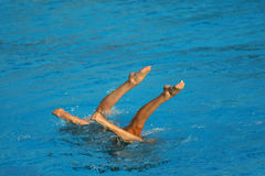 Synchronized Swimming. Synchronized Swimmers legs point up out of the water in action Royalty Free Stock Photo
