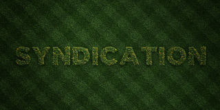 SYNDICATION - fresh Grass letters with flowers and dandelions - 3D rendered royalty free stock image Royalty Free Stock Photos