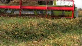 Syndykat na dojrzałym pszenicznym polu zbiory wideo