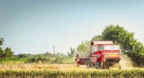 Syndykat zbiera banatki w polu w lecie Zdjęcie Stock