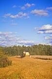 syndykata żniwiarz kukurydzany tnący obrazy stock