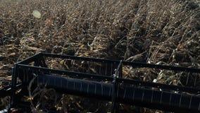 Syndykata żniwiarz młóci przeprowadzających żniwa wheats pov zbiory
