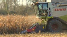Syndykata żniwiarz na pszenicznym polu zbiory wideo