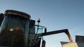 Syndykata żniwiarz nalewa kukurydzanego żniwo ciężarówka zbiory wideo